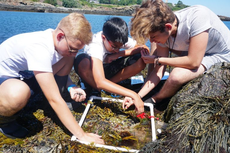 Students observe a coastal ecosystem in the one-week Marine Biology program