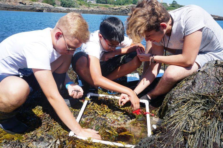 Students observe a coastal ecosystem in the one-week Marine Biology program