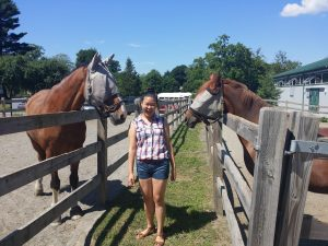 Student examine horses in the Veterinary Medicine three-week program