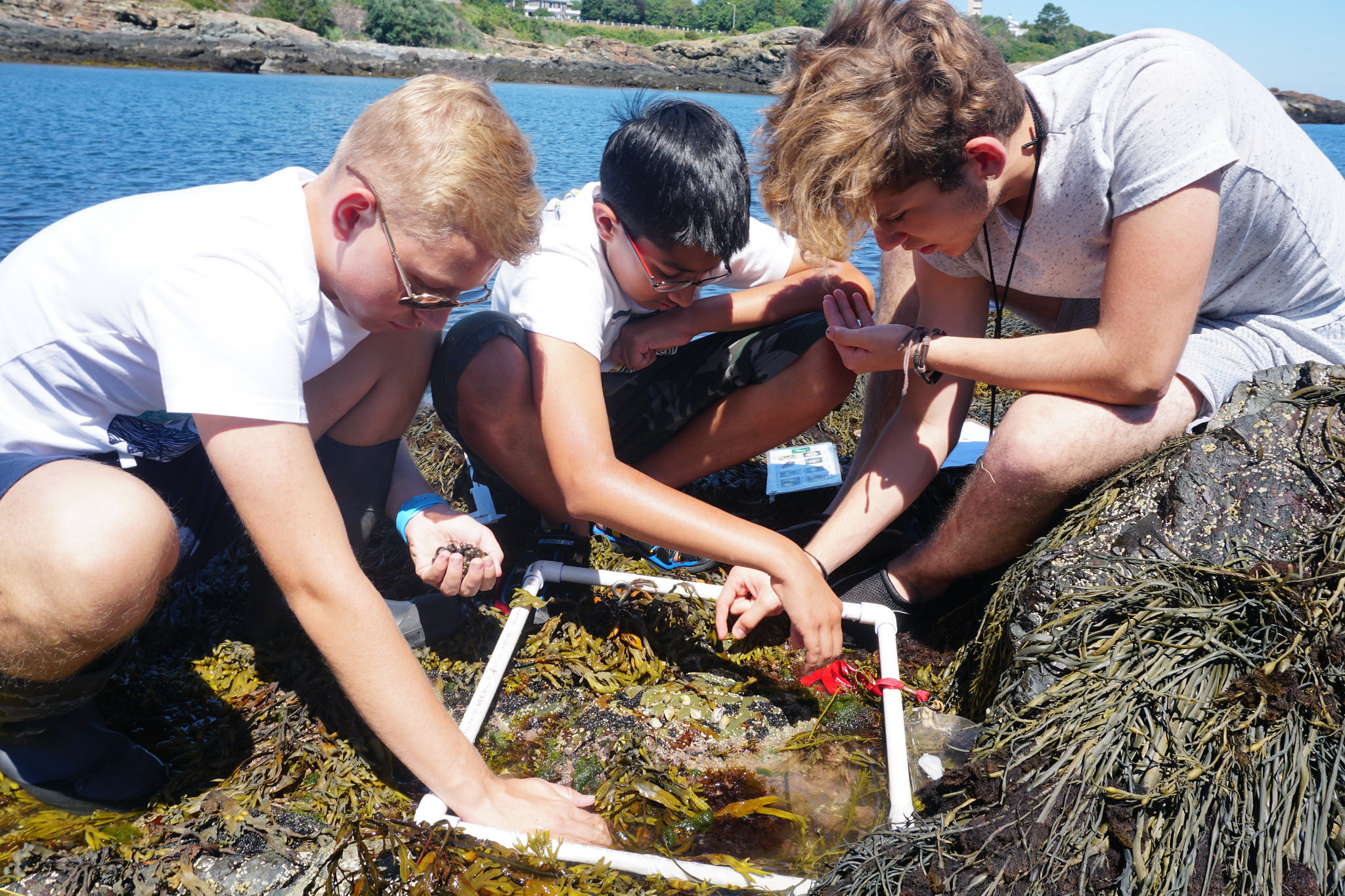 Students work with a natural ecosystem in the Marine Biology three-week summer program