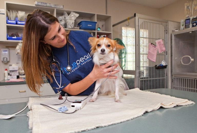 Students learn about dog therapy close up at The Flow Dog in the Veterinary Medicine three-week summer program