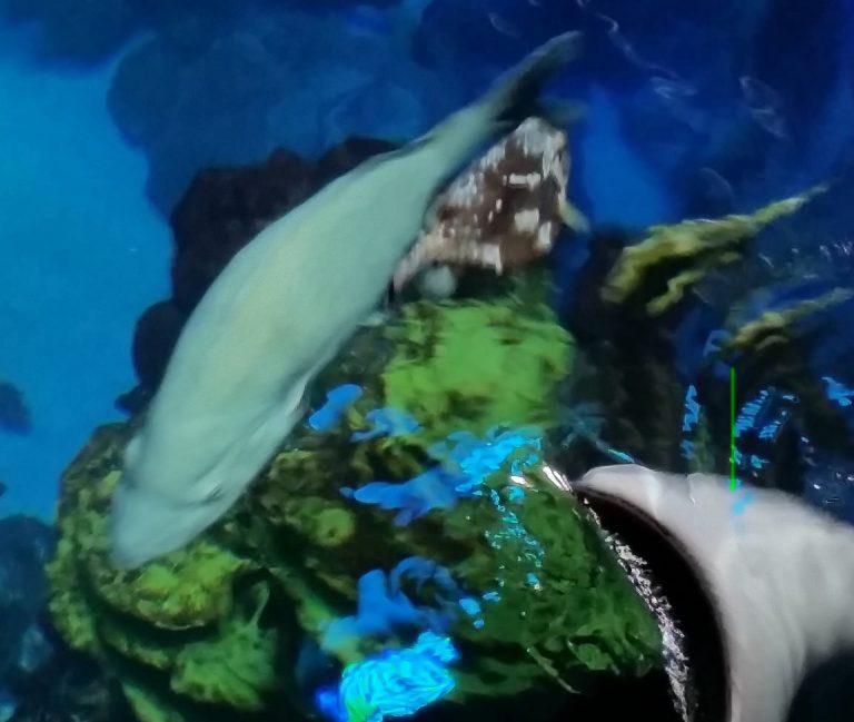Students visit an aquarium in the Marine Biology three-week summer science program