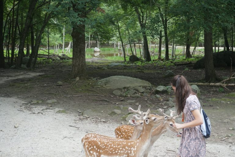 Students visit the Southwick's Zoo in the Veterinary Medicine three-week summer medical program