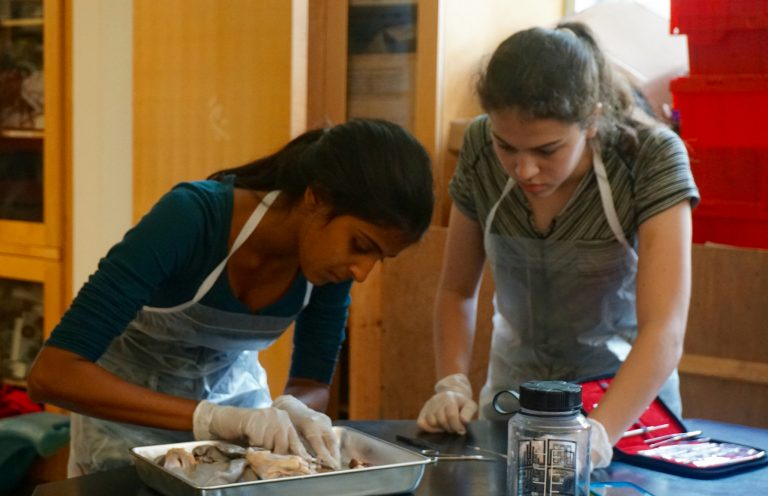 Students do medical research in the Biomedical and Surgical Research three-week summer program