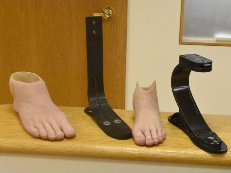 Anatomy and Surgical Research Prosthetic