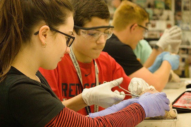 Students do an experiment in the Intro to Surgery one-week summer medical program