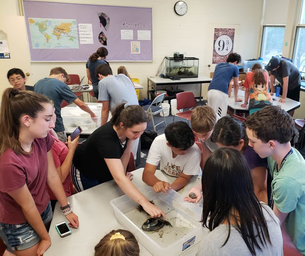 Students study marine life in the Marine Biology three-week summer science program