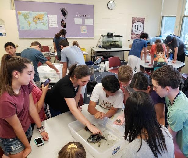 Students study marine life in the Marine Biology three-week summer science program