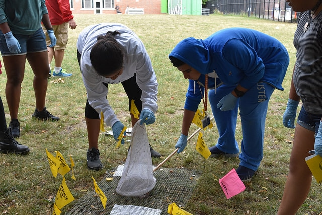 Students examine a mock crime scene in the Forensic Science three-week summer science program