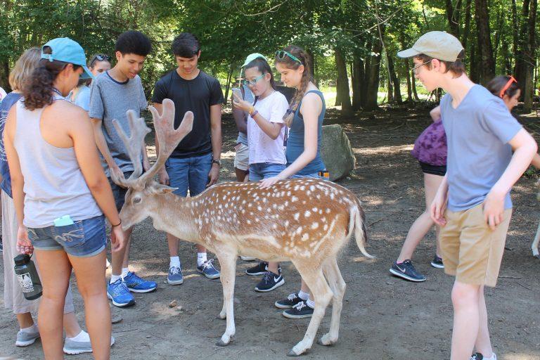 Students pet a deer on a field trip in the Veterinary Medicine three-week summer medical program