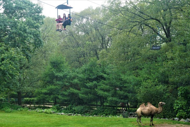 Students take a lift ride on a field trip in the Veterinary Medicine three-week summer medical program
