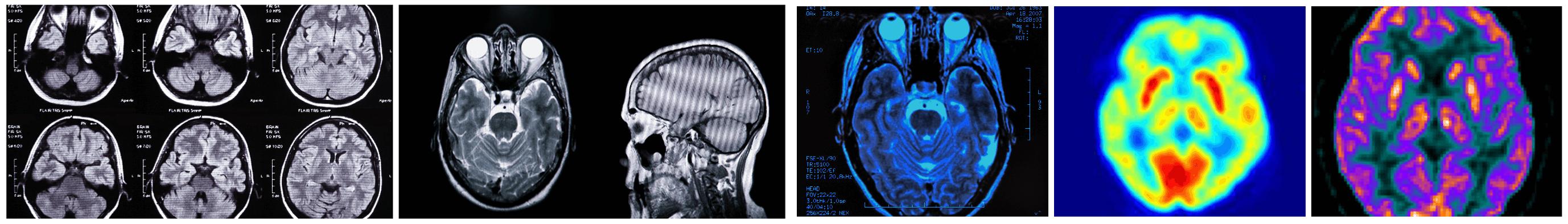 Neuroscience Divider