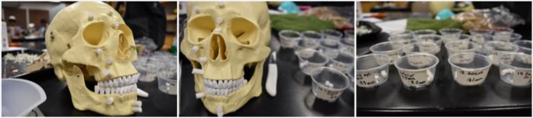 Skull Line 1