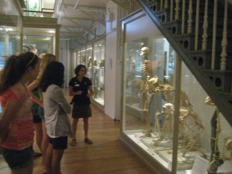 Students visit the Peabody Museum in the Anatomy one-week summer medicine program