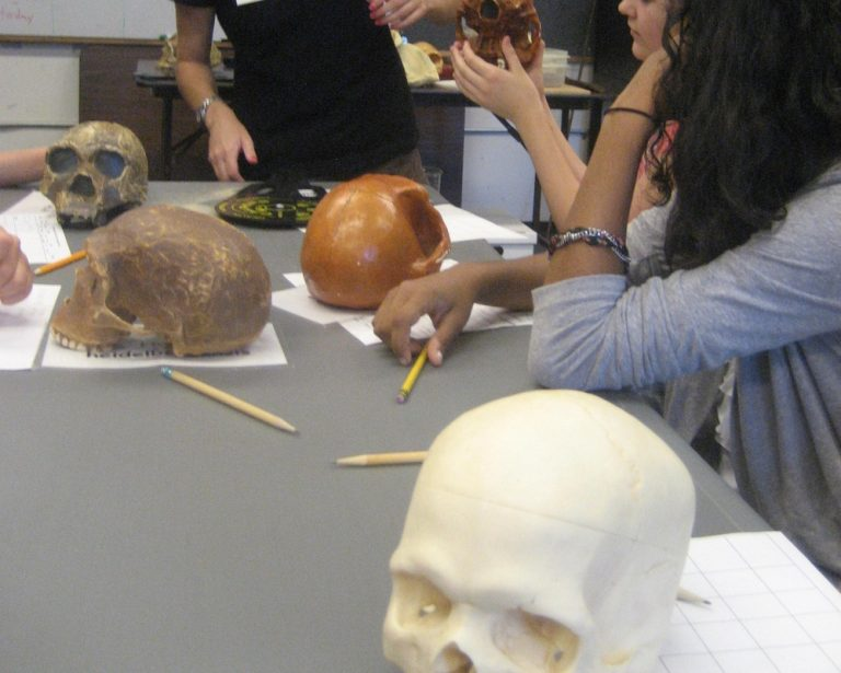 Students measure skulls in the Anatomy one-week summer medicine program