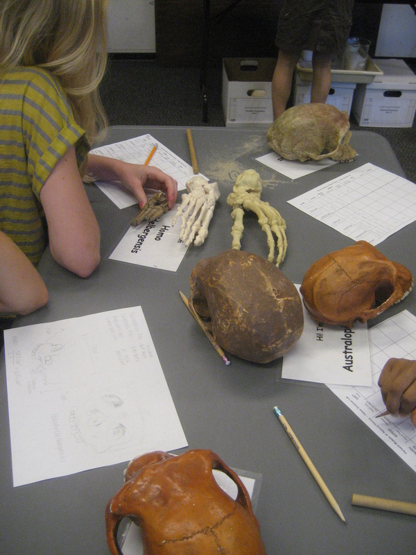 Students measure skeletons in the Anatomy one-week summer medicine program