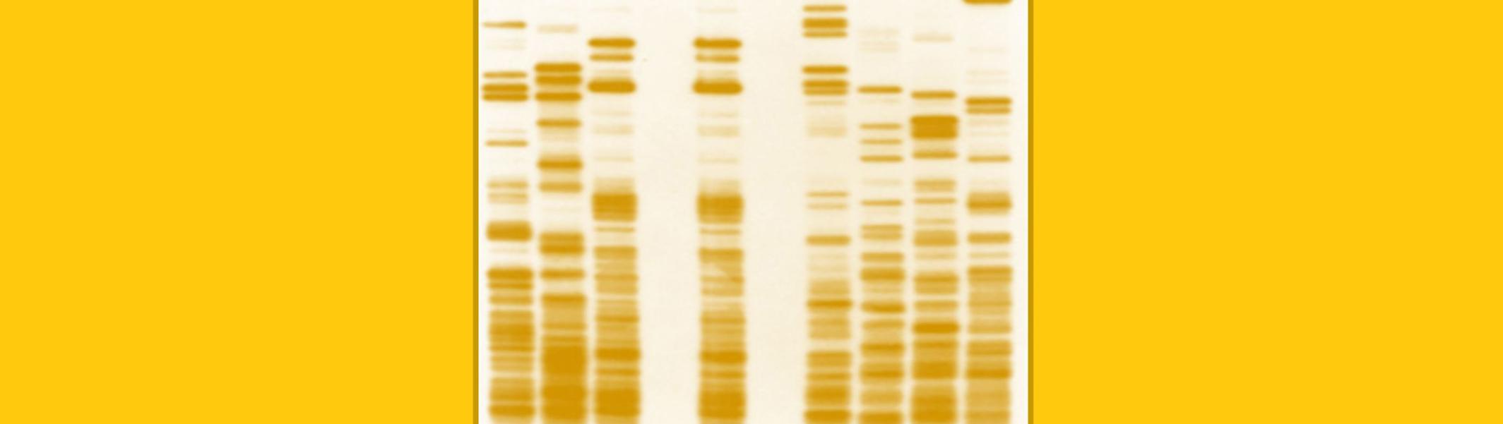 Human Genetics - Levels