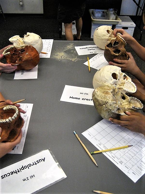 anatomy slideshow 1