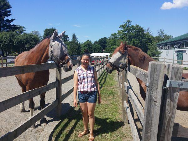 Student examine horses in the Veterinary Medicine three-week program